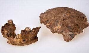 Ισραήλ: Ανακαλύφθηκε νέος τύπος αρχαίου ανθρώπου - Αλλάζει η ιστορία της ανθρώπινης εξέλιξης;