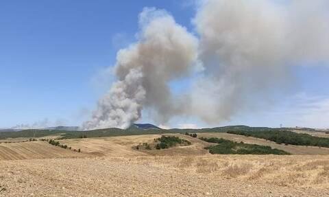 Φωτιά στη Λάρισα: Μεγάλης έκτασης το πύρινο μέτωπο - Ενισχύθηκαν οι δυνάμεις της Πυροσβεστικής