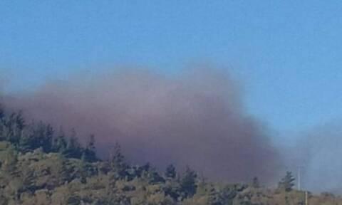 Φωτιά ΤΩΡΑ στη Χίο: Μέσα στο χωριό Κατάβαση οι φλόγες - Εκκενώνονται τα σπίτια