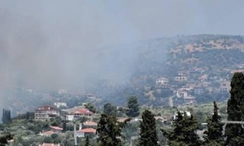 Φωτιά στη Νέα Ιωνία Βόλου - Κάηκαν ιδιοκτησίες