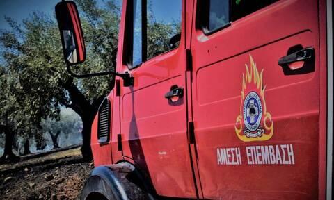 Θεσσαλονίκη: Πυρκαγιά σε χορτολιβαδική έκταση στα Διαβατά και στον Βαθύλακκο