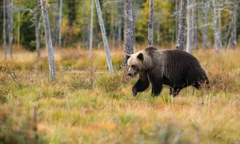 Μάχη επιβίωσης: Αρκούδα εναντίον τίγρης - Το αποτέλεσμα δεν το περίμενε κανείς
