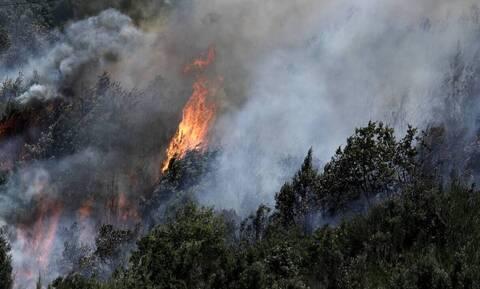 Κύπρος: Μεγάλη φωτιά στην Πάχνα Λεμεσού