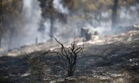 Φωτιά στο Σέιχ Σου: Κάηκαν 90 στρέμματα – Από πού φαίνεται να ξεκίνησε η φωτιά