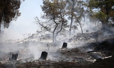 Χανιά: Σε ύφεση η πυρκαγιά σε ορεινή περιοχή του Δήμου Καντάνου-Σελίνου