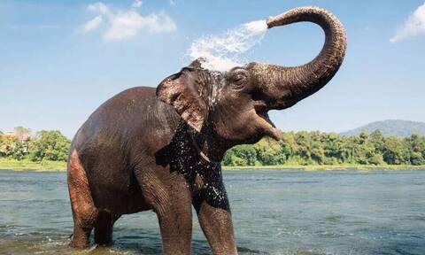 Ελέφαντας έκανε «ντου» στην κουζίνα - Τα είδαν όλα οι ιδιοκτήτες του σπιτιού