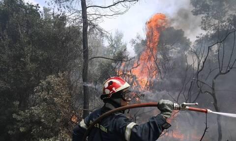 Φωτιά στη Σαλαμίνα - Κινητοποίηση της Πυροσβεστικής για την κατάσβεση