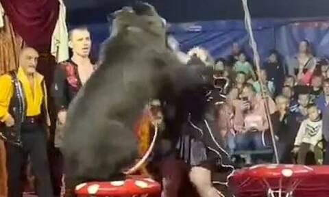 Πανικός σε τσίρκο στη Ρωσία: Αρκούδα επιτέθηκε στην θηριοδαμαστή της – Παιδιά ανάμεσα στους θεατές