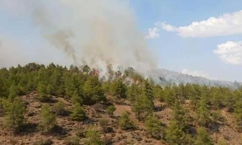ΓΓΠΠ: Πολύ υψηλός κίνδυνος πυρκαγιάς (κατηγορία κινδύνου 4) την Τετάρτη για 4 Περιφέρειες