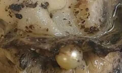 Ιδιοκτήτρια ουζερί στην Πάτρα βρήκε… μαργαριτάρι μέσα στο στρείδι!