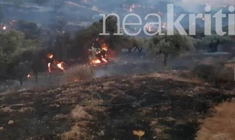 Φωτιά ΤΩΡΑ: Μαίνεται το πύρινο μέτωπο στο Λασίθι - Ενισχύθηκαν οι πυροσβεστικές δυνάμεις
