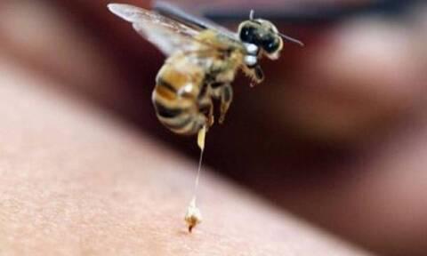 Κρήτη: Άνδρας υπέστη αλλεργικό σοκ από τσίμπημα σφήκας - Σώθηκε χάρη στο ΕΚΑΒ