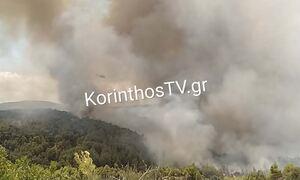 Φωτιά ΤΩΡΑ: Μαίνεται η πυρκαγιά στην Κορινθία - Συνελήφθη ένας άνδρας για εμπρησμό