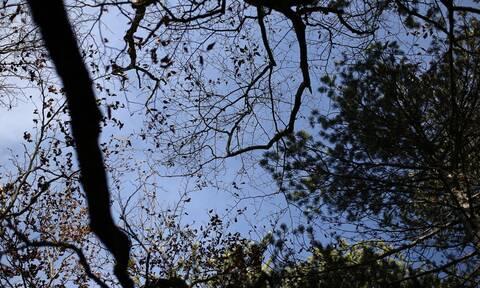 Περιπέτεια 19 εκδρομέων - Χάθηκαν σε δασική περιοχή της Νάουσας