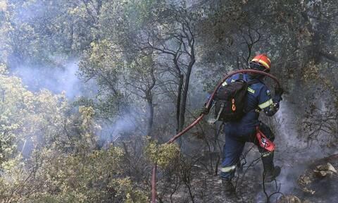 Φωτιά ΤΩΡΑ στη Σαλαμίνα - Κοντά σε σπίτια οι φλόγες