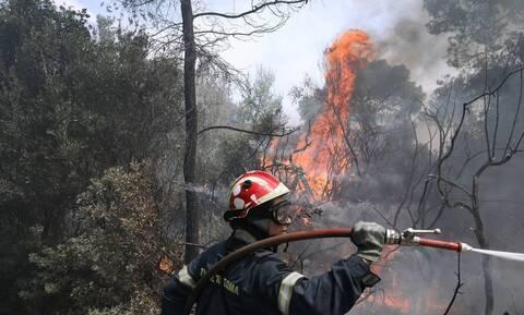 Φωτιά ΤΩΡΑ - Κιλκίς: Μεγάλη πυρκαγιά στο δάσος του Σκρα - Δύσκολη επιχείρηση σε δύσβατα σημεία