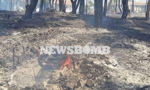 Φωτιά στη Σταμάτα: Προειδοποίηση meteo.gr - «Θα επιδεινωθούν οι άνεμοι τις επόμενες ώρες»