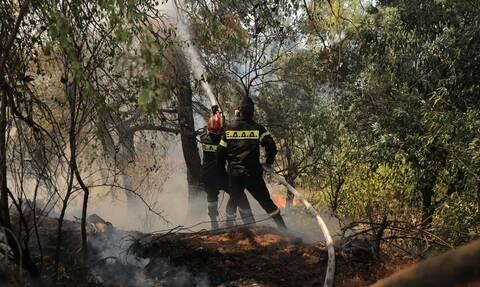 Φωτιά στη Σταμάτα: Στο Αυτόφωρο ο μελισσοκόμος - Οι κατηγορίες που τον βαραίνουν