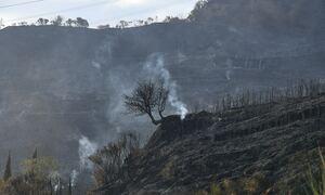 Φωτιές στην Αχαΐα: Βελτιωμένη η εικόνα στη Δροσιά - Οριοθετήθηκε η πυρκαγιά στην Ελεκίστρα