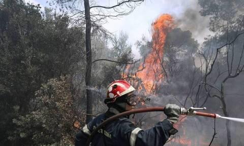 Μεγάλη πυρκαγιά κοντά στο Αχίλλειο Φαρσάλων – Πάνω από 40 πυροσβέστες στο σημείο
