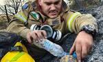 Αχαΐα: Ο πυροσβέστης που έγινε viral - Η φωτογραφία με τη χελώνα μέσα στην πυρκαγιά