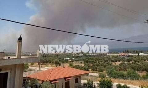 Φωτιά ΤΩΡΑ στη Ζήρια Αχαΐας – Εκκενώνεται οικισμός
