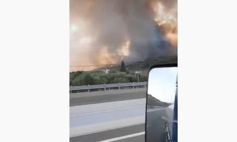 Φωτιά στην Αχαΐα: Συγκλονιστικό βίντεο από την Κορίνθου – Πατρών