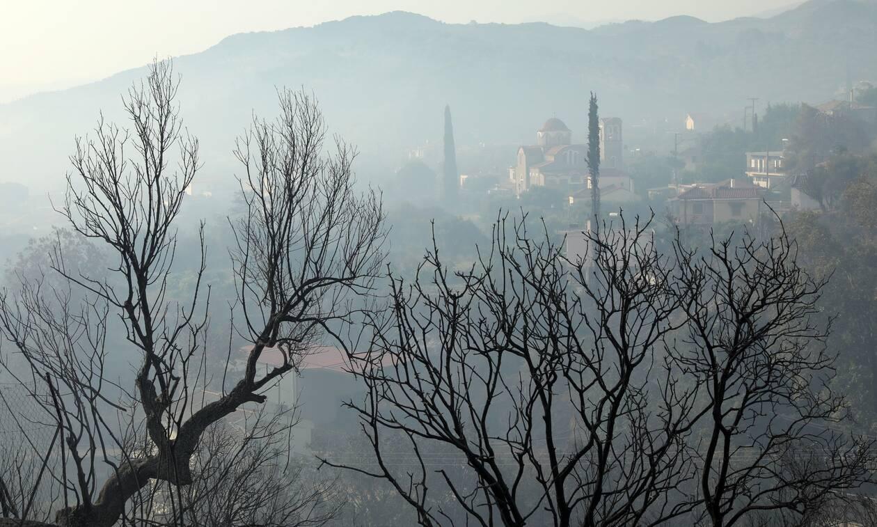 Φωτιά στην Αχαΐα: Μεγάλες οι ζημιές στις καλλιέργειες - Καήκαν ελιές και αμπέλια