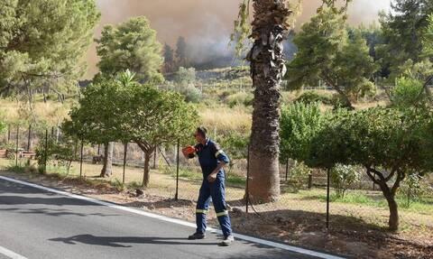 Έβρος: Απαγόρευση κυκλοφορίας αύριο σε δάση της περιοχής για την πρόληψη πυρκαγιών