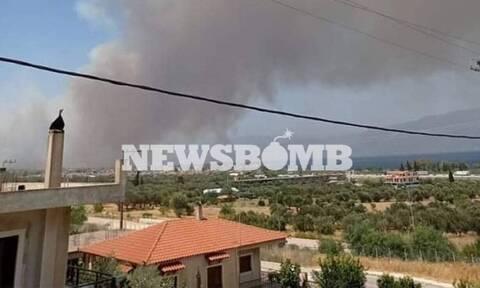 Φωτιά στην Αχαΐα: Κάηκαν πάνω από 3.000 στρέμματα