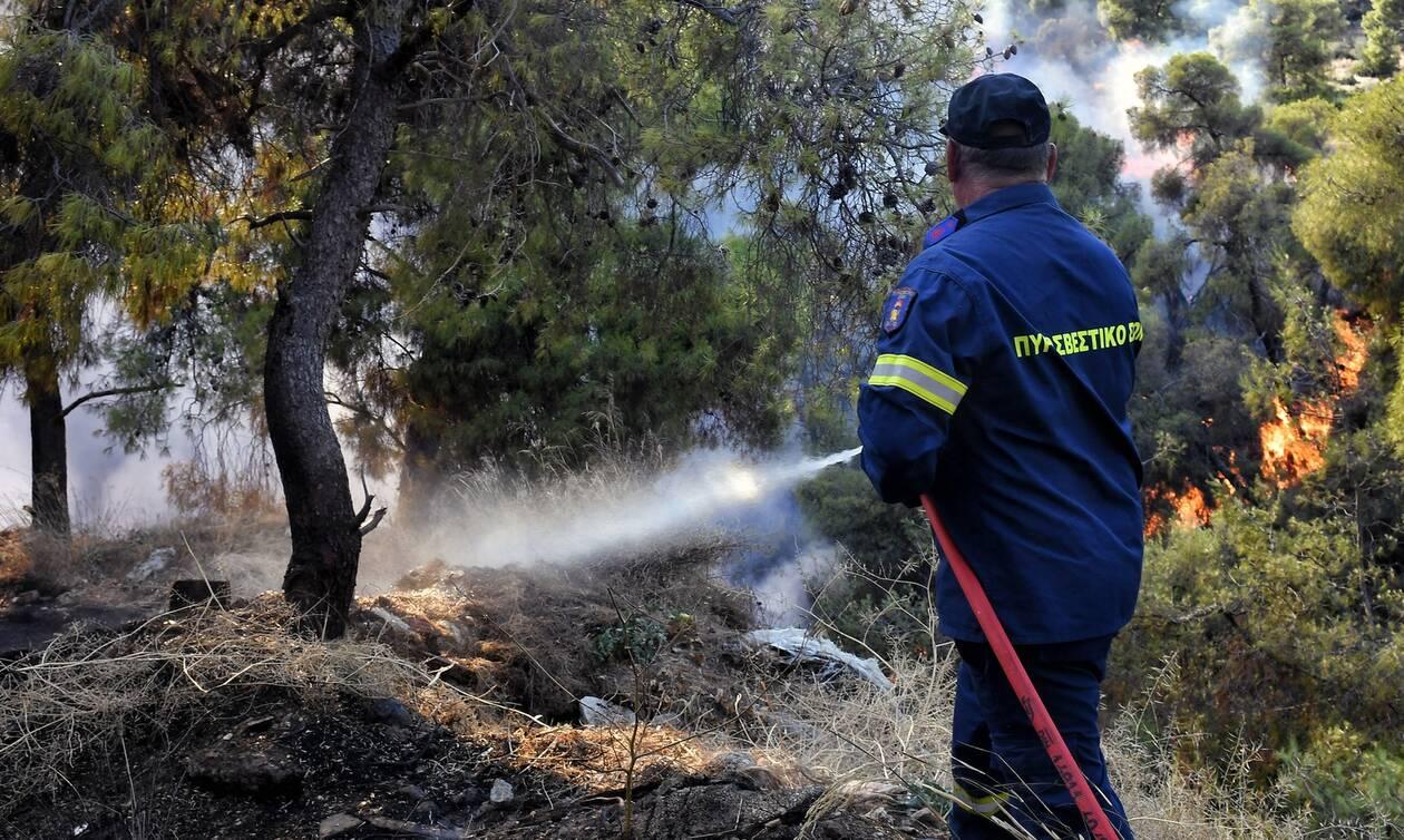 Φωτιά τώρα: Πυρκαγιά στα Λαγυνά Έβρου