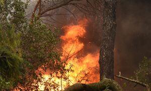 Θεσσαλονίκη: Φωτιές στη Λητή και στην Ευκαρπία