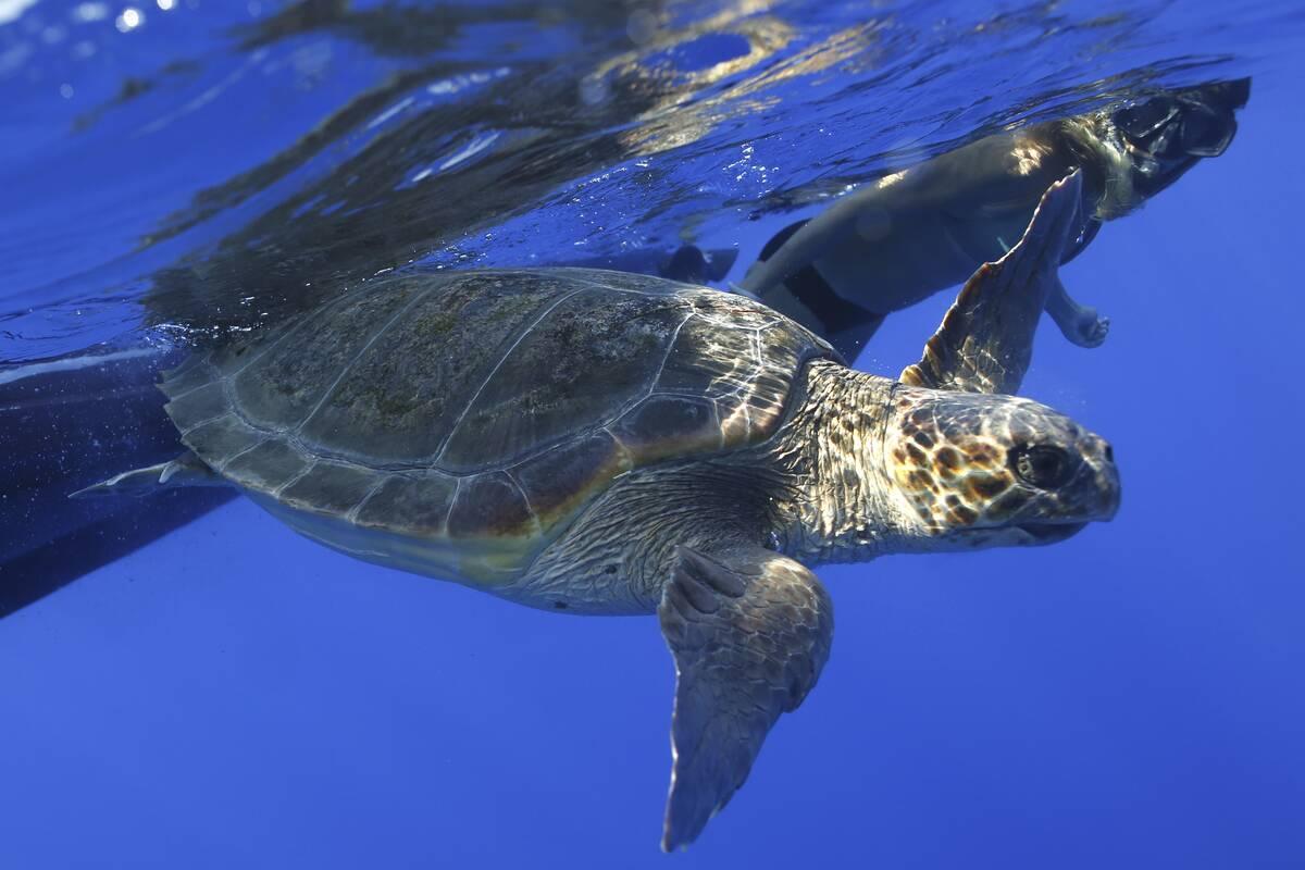 sea turtle 2 8