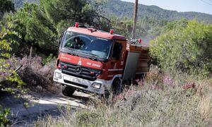 Φωτιά ΤΩΡΑ στη Μεσσηνία - Επί ποδός η Πυροσβεστική