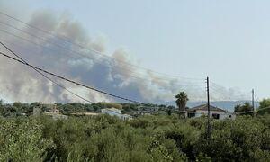 Φωτιά στη Μεσσηνία: Εντολή για προληπτική εκκένωση οικισμού - Ενισχύθηκαν οι πυροσβεστικές δυνάμεις