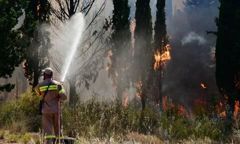 Πυρκαγιά σε δάσος