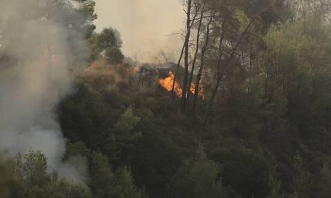 Υπό μερικό έλεγχο η φωτιά στο Βασιλίτσι Μεσσηνίας- Εμπρησμό καταγγέλλει ο δήμαρχος