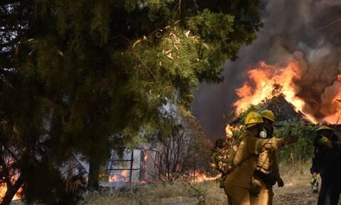 Φωτιά τώρα: Αναζωπύρωση της πυρκαγιάς στο Βασιλίτσι