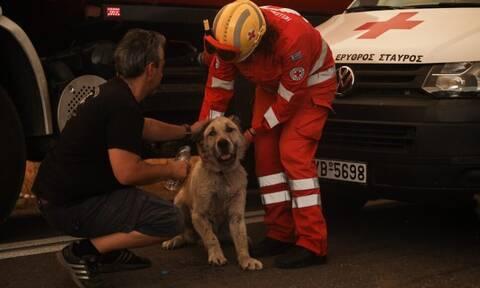 Φωτιά Βαρυμπόμπη: Συγκλονιστική εικόνα! Αστυνομικοί έσωσαν σκύλο από την πύρινη λαίλαπα