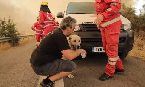 Φωτιά στη Βαρυμπόμπη: Ο Ελληνικός Ερυθρός Σταυρός δίπλα στους κατοίκους των πληττόμενων περιοχών