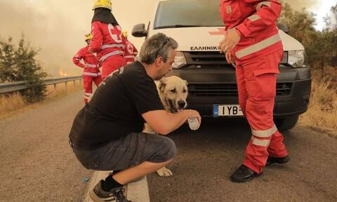 Πυρκαγιά Βαρυμπόμπη: Άνθρωποι σώζουν άλογα και σκυλιά - Εικόνες ελπίδας μέσα στον πύρινο εφιάλτη