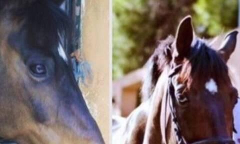 Βρέθηκε ο Amur: Ήταν μαζί με άλλα 4 άλογα στο Τατόι