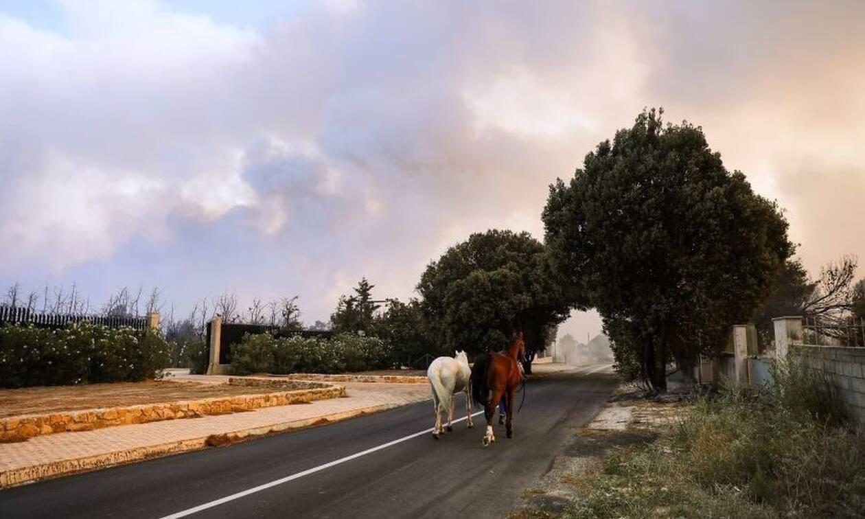 Λίλιαν Ντίντη στο Νewsbomb.gr: «Σώθηκαν άλογα, πόνι και γαϊδουράκια» απο την κόλαση της φωτιάς