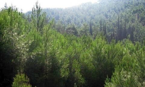 Φωτιά: Απαγορεύεται η πρόσβαση σε δάση - Τα πρόστιμα για παραβάσεις
