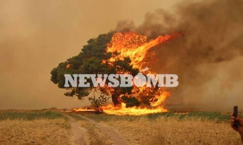 Φωτιά ΤΩΡΑ: Μια προσαγωγή υπόπτου στο Κρυονέρι - Νεαρός κινούταν κοντά στο μέτωπο