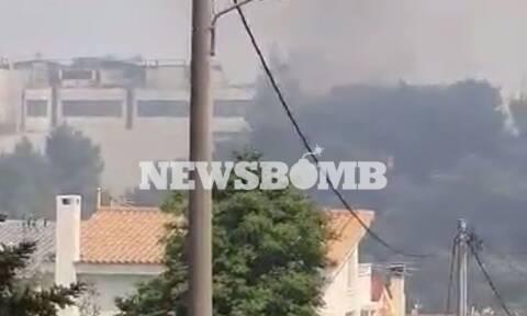 Φωτιά ΤΩΡΑ: Μάχη στο Κρυονέρι δίπλα σε εργοστάσια – Επιχειρούν εναέρια μέσα
