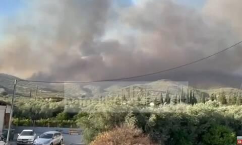Φωτιά στη Φωκίδα: Εκκενώνονται τρία χωριά - Μήνυμα του 112