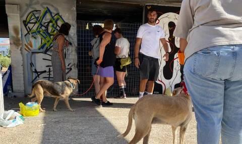 Κάλαμος: Μεταφέρθηκαν 190 αδέσποτα και φιλοξενούνται στον Δήμο Βάρης Βούλας Βουλιαγμένης