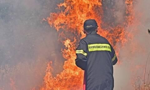 Φωτιά στη Λακωνία: Μάχη στη δύσβατη περιοχή της Δεσφίνας για τους πυροσβέστες