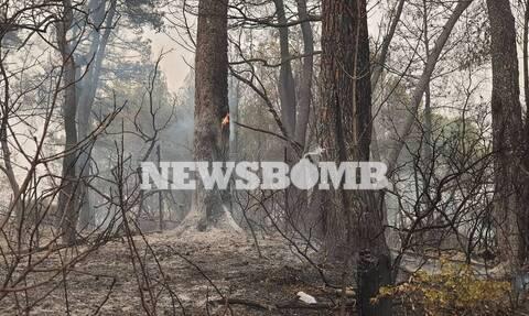 Φωτιά στην Εύβοια μεγάλη καταστροφή
